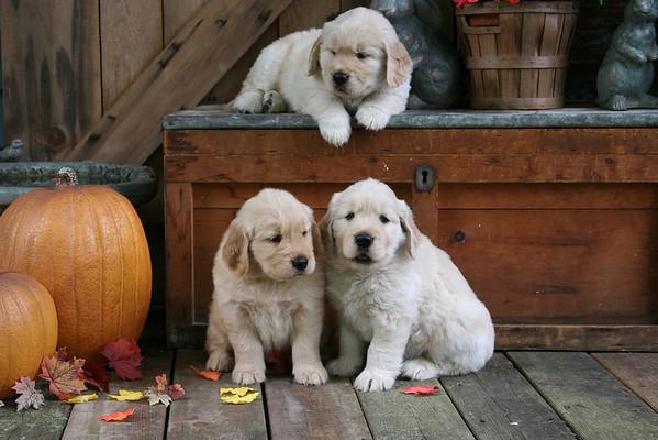 Ivory's pups 09