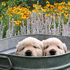 washtub garden