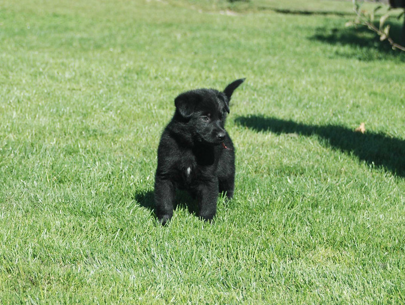 Red girl: : six weeks old