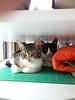 Kittens_008