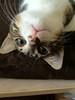 Kittens_011