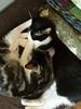 Kittens_014