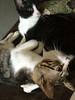 Kittens_013