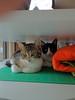 Kittens_009