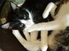 Kittens_015