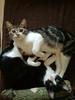 Kittens_010