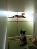 Jack n Jill kittens_001