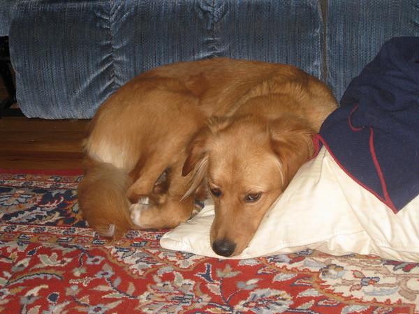 IMG_0093Jackson sleeping on Daddy Jeff's foot