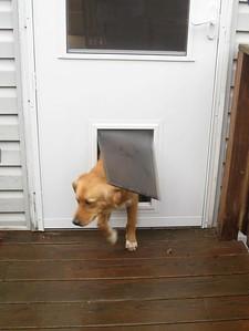 IMG_0123Using the doggie door
