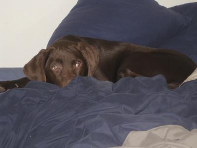 IMG_0095Madison sleeping on Uncle Jeff's bed