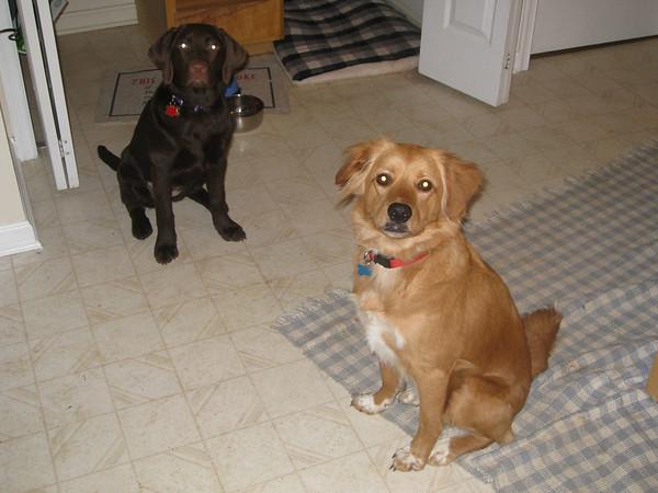 "IMG_0094Maddie & Jack, a.k.a. ""Chocolate & Peanut Butter"""