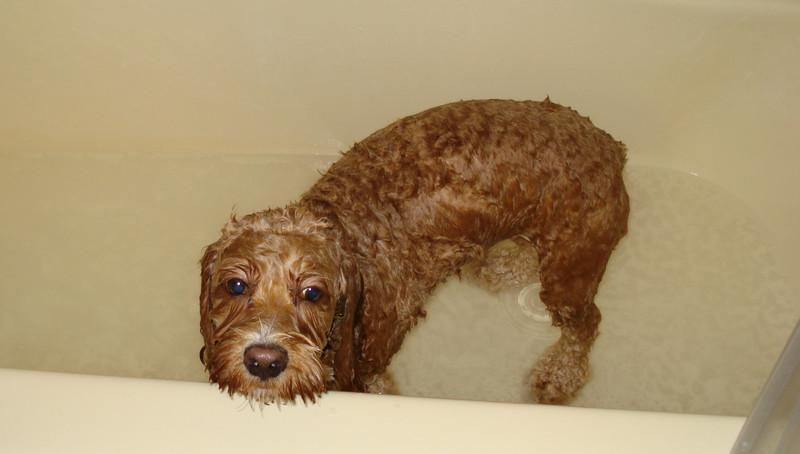 I love getting a bath!