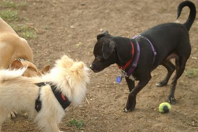 Jake at the Dog Park