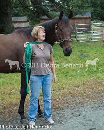 harvard_horses-6