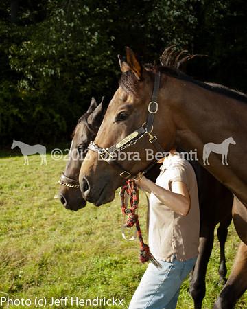 harvard_horses-27