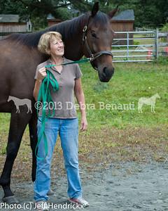 harvard_horses-4