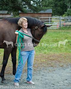 harvard_horses-3