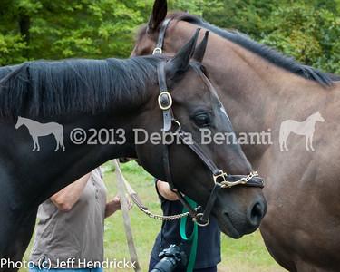 harvard_horses-15