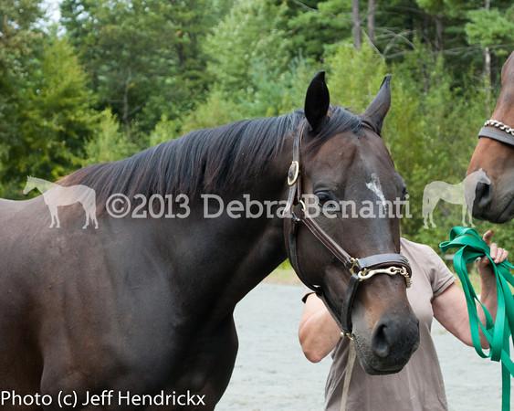 harvard_horses-24