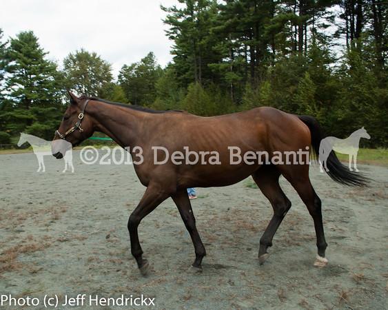 harvard_horses-11