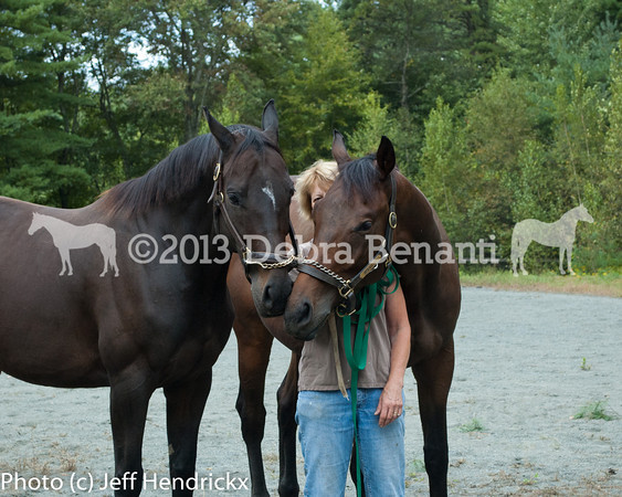 harvard_horses-21
