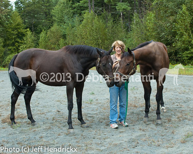 harvard_horses-22