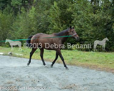 harvard_horses-7
