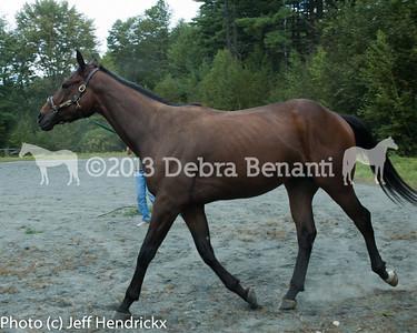 harvard_horses-9