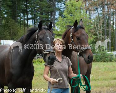 harvard_horses-17