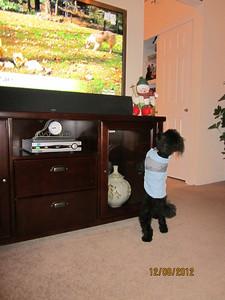 Jesse watching Animal Planet December 2012