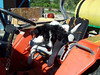 Jester takes a break on his first ride on the tractor in the vineyard (June '07).
