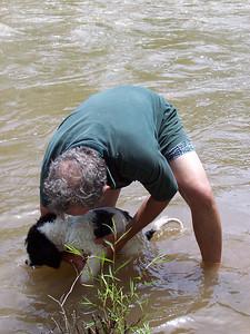 Jester gets rinsed in the Rio Grande.