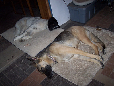 Two tired puppies!