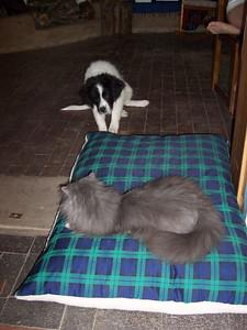 Einstein takes over Jester's new dog bed.