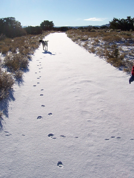Walking in the desert snow on Saturday before Christmas. Except for some rabbit and coyote tracks, we were the first ones to track up the new snow.