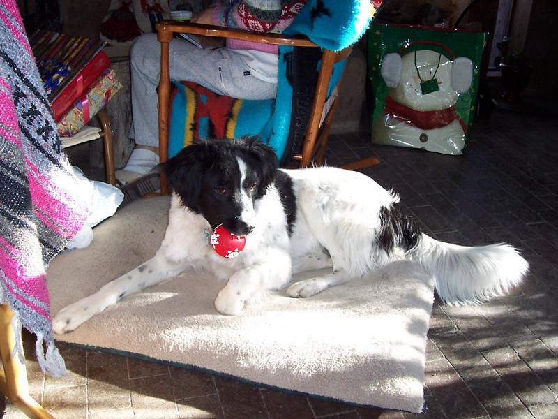 Jester enjoys a christmas present from his grandma.