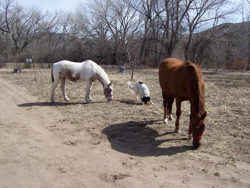 Jester and the neighbor's horses, Amadaeus and Brandy, snack on some old carrots from the garden.
