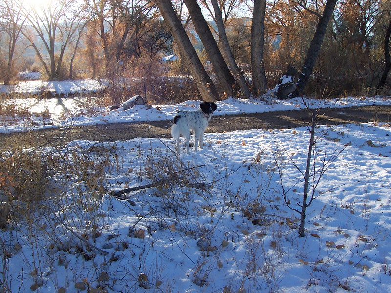 Jester's first snow: Thanksgiving 2007 - <br /> We came home from visiting Texas to find 4 inches on the ground.