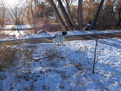 Jester's first snow: Thanksgiving 2007 -  We came home from visiting Texas to find 4 inches on the ground.