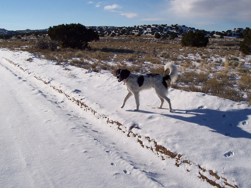 Walking in the desert snow on Saturday before Christmas.