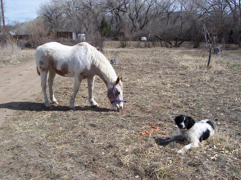 Jester and the neighbor's horse, Amadaeus, snack on some old carrots from the garden.