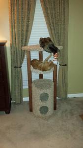 Cat Condo November 13, 2013