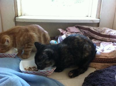Tabby & Tortoiseshell