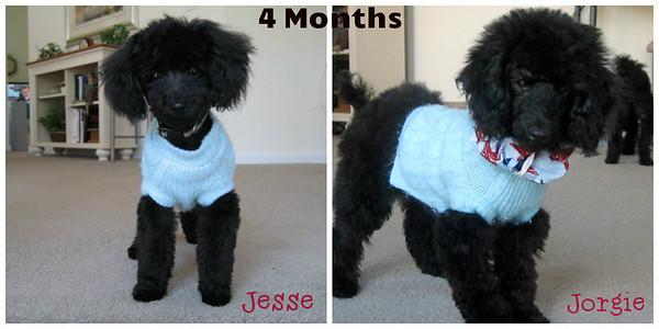 Around 4 Months Jesse & Jorgie