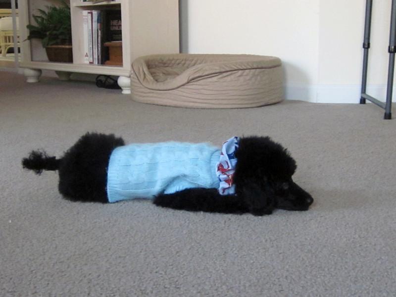April 23, 2004 (Day 5) Jorge in Jesse's Light Blue Sweater