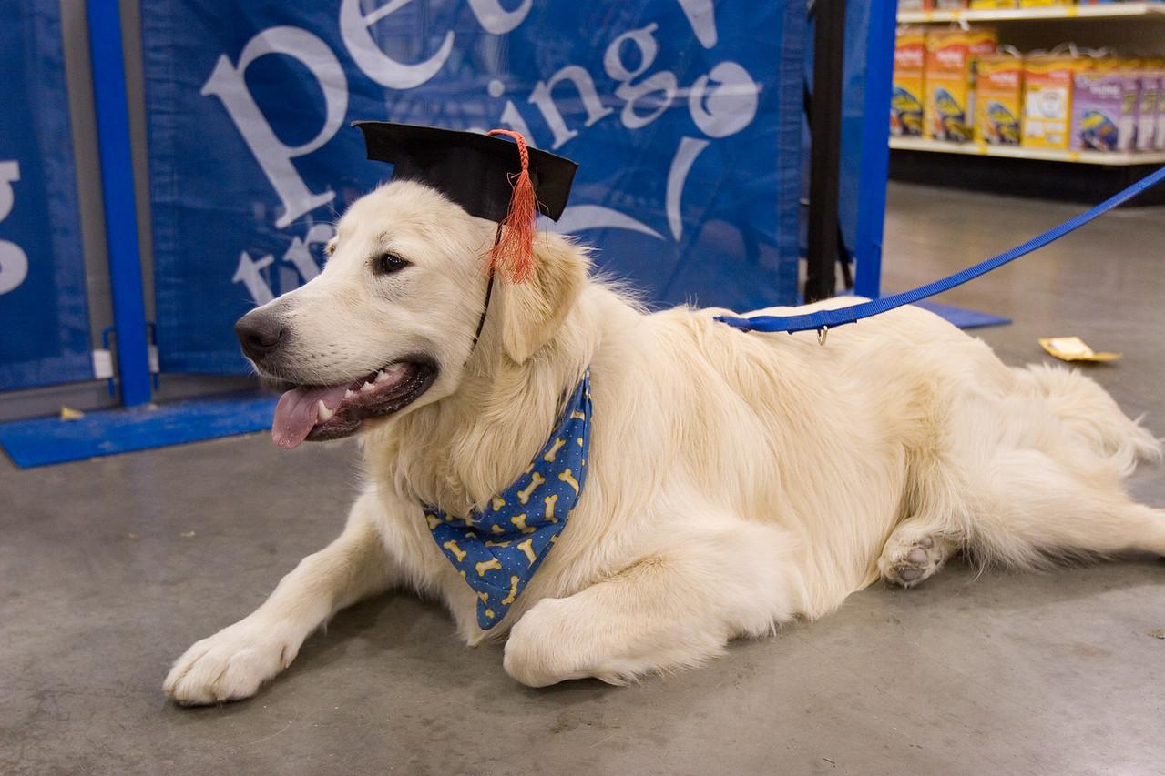 Intermediate Obedience Training - Test & Graduation