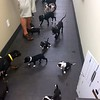 The pups trapped in a hallway at the Ocala FBO. Most of them pee'd and a few pooped right away. We have the Ground Crew ready to handle this at my hangar, but were not equipped to do this in a hallway at Ocala!  Took over half an hour to unload, clean up all the messes and re-load them on the plane.<br /> Note the footprints from the pups walking in other pups pee. :( At least it was a tile floor.