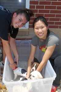 The volunteers did not mind giving them Flea Baths. :)