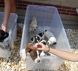 Pups waiting for their turn at a flea bath...