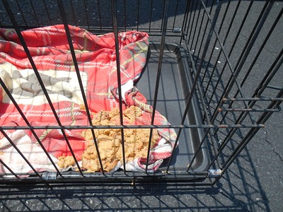 This is what happens when the sending rescues do not follow instructions and feed the pups breakfast.  :(
